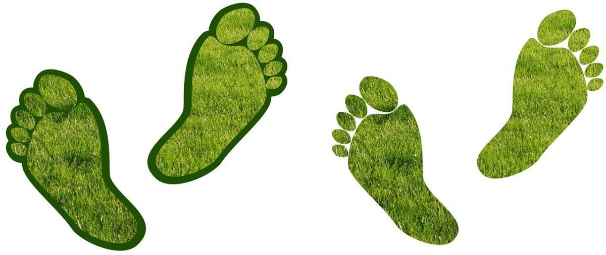 ESG vs Low-Carbon Investing
