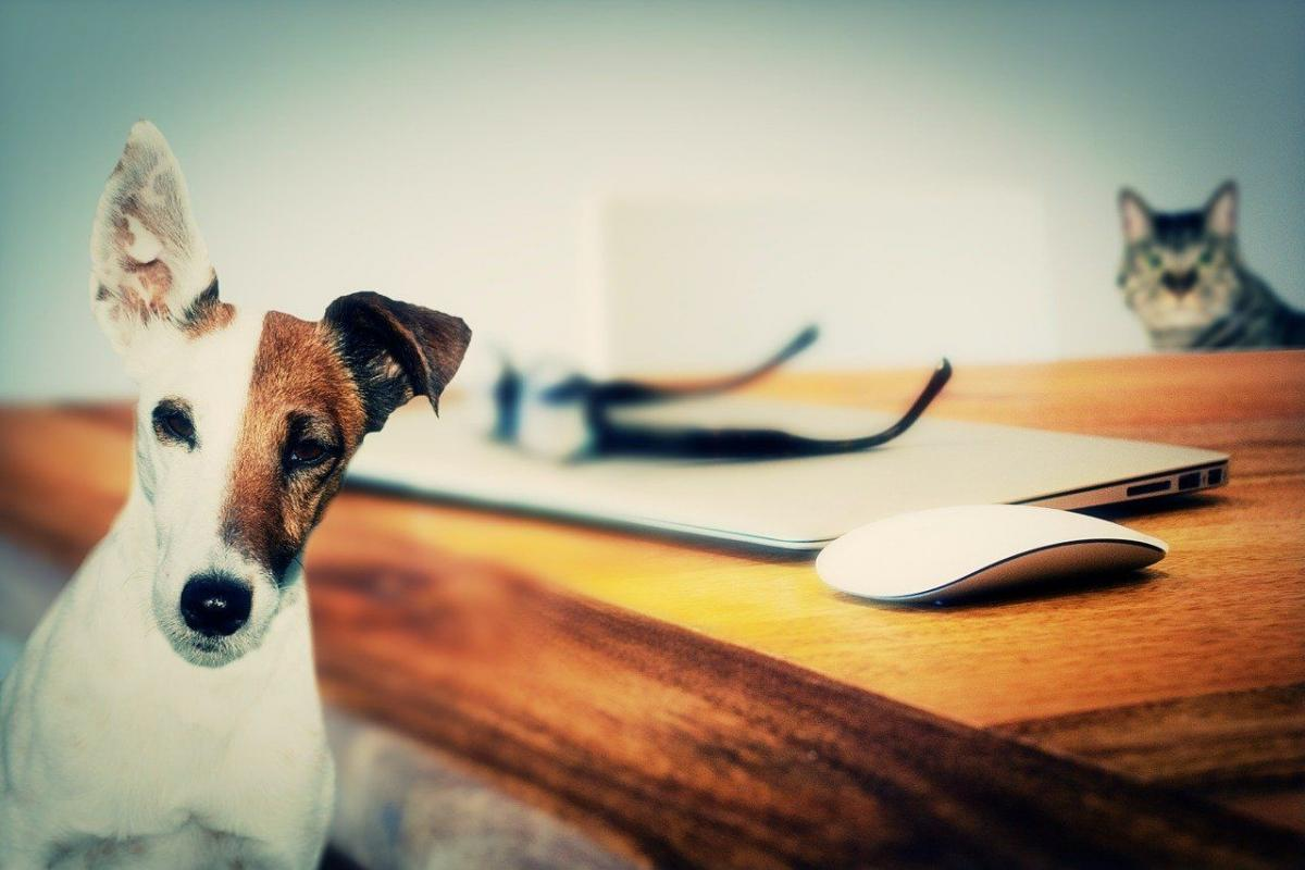 Stat Arb, Algos and the Difference Between Cats and Dogs