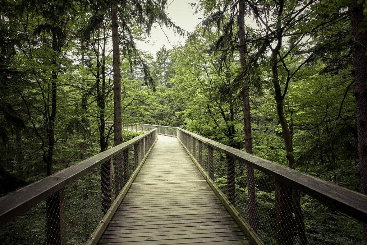 ESG and Its Growing Influence in the Timberland Investment Sector