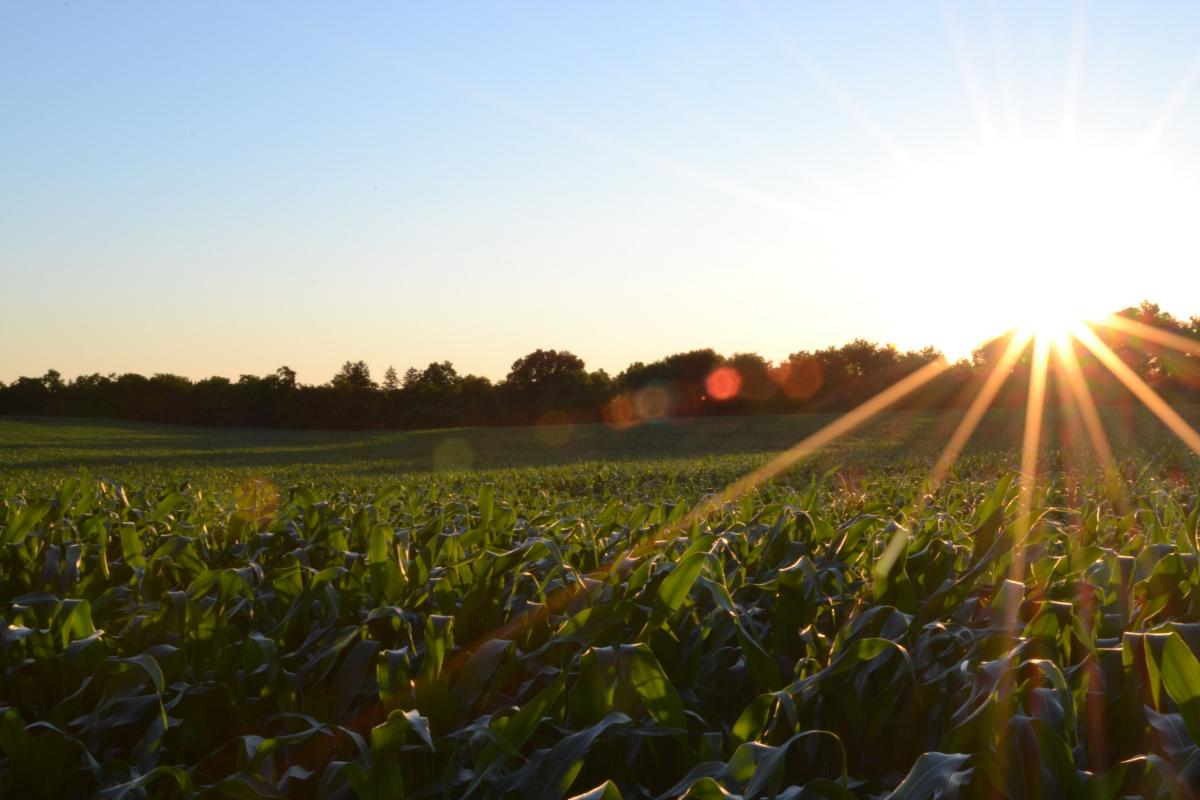 The Coming Global Agricultural Crisis